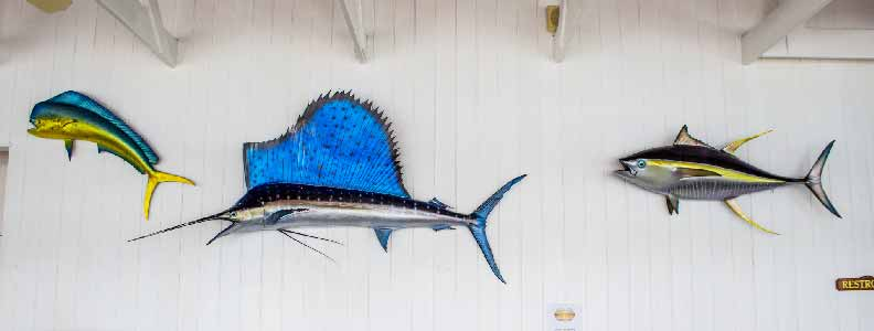 Mounted fish on the walls